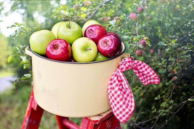 קטיף פירות בשבת